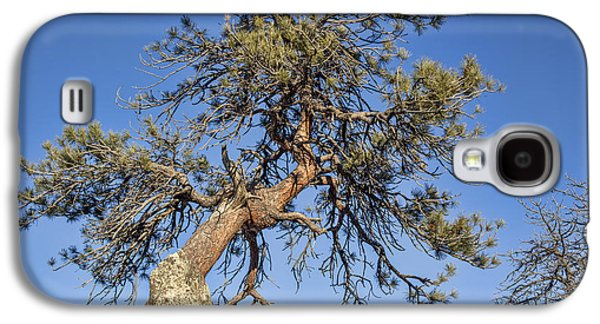 Fort Collins Galaxy S4 Cases - Twisted Pine Tree Galaxy S4 Case by Marek Uliasz