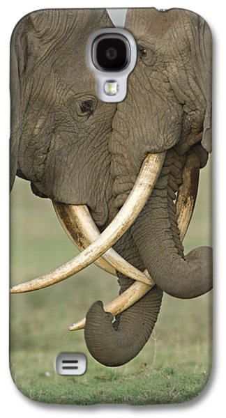 Animal Themes Galaxy S4 Cases - Two African Elephants Fighting Galaxy S4 Case by Panoramic Images