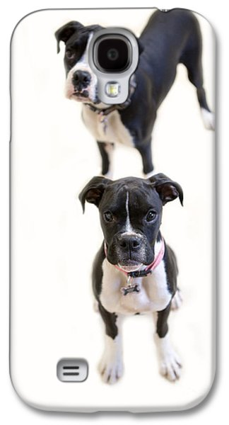 Boxer Galaxy S4 Cases - Two Boxers Galaxy S4 Case by Rebecca Cozart
