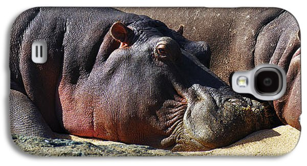 Two Hippos Sleeping On Riverbank Galaxy S4 Case by Johan Swanepoel