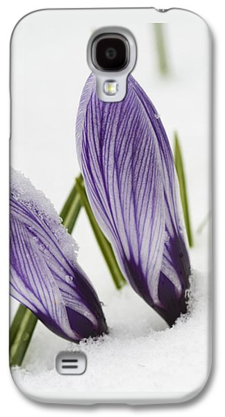Anticipation Photographs Galaxy S4 Cases - Two purple crocuses in spring with snow Galaxy S4 Case by Matthias Hauser