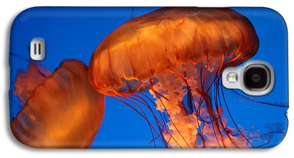 Underwater Photos Galaxy S4 Cases - Two Sea Nettles Galaxy S4 Case by Donna Corless
