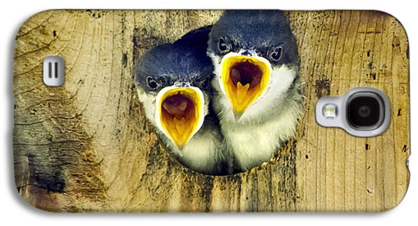Swallow Chicks Galaxy S4 Cases - Two Tree Swallow Chicks Galaxy S4 Case by Christina Rollo