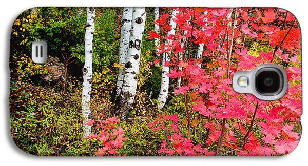 Autumn Trees Galaxy S4 Cases - Uinta Colors Galaxy S4 Case by Chad Dutson
