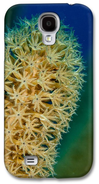 Plankton Galaxy S4 Cases - Underwater Gorgonian Galaxy S4 Case by Jean Noren