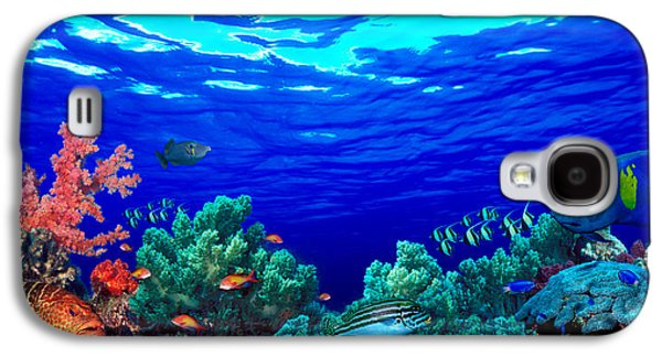 Animal Themes Galaxy S4 Cases - Underwater View Of Pallid Triggerfish Galaxy S4 Case by Panoramic Images