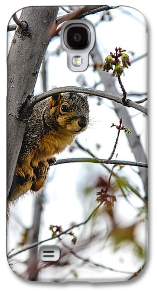 Fox Squirrel Galaxy S4 Cases - Up the Tree Galaxy S4 Case by Robert Bales