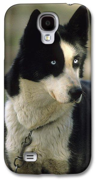 Usa, Alaska, Sled Dog, Dog Sledding Galaxy S4 Case by Gerry Reynolds