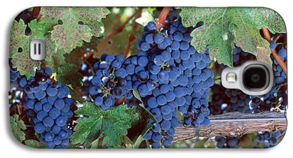 Winery Photography Galaxy S4 Cases - Usa, California, Napa Valley, Grapes Galaxy S4 Case by Panoramic Images