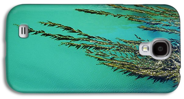 Nature Abstracts Galaxy S4 Cases - Usa, California, Seaweed Floating Galaxy S4 Case by Larry Dale Gordon