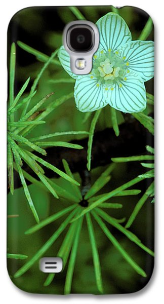 Usa, Michigan, Grass Of Parnassus Galaxy S4 Case by Jaynes Gallery