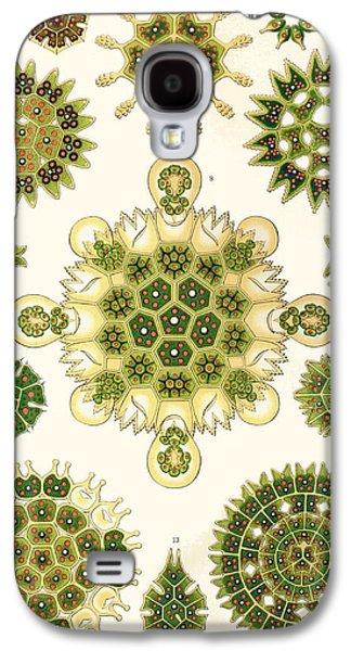 Nature Study Drawings Galaxy S4 Cases - Varities of Pediastrum from Kunstformen der Natur Galaxy S4 Case by Ernst Haeckel