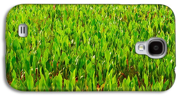 Florida Flowers Galaxy S4 Cases - Vegetation, Boynton Beach, Florida, Usa Galaxy S4 Case by Panoramic Images