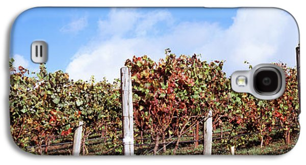 Wine Scene Galaxy S4 Cases - Vines In A Vineyard, Napa Valley, Wine Galaxy S4 Case by Panoramic Images