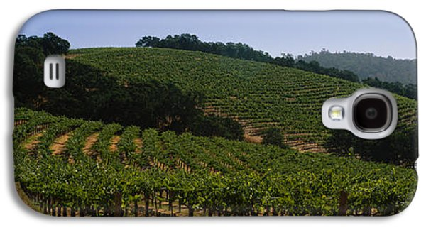 Vineyard In Napa Galaxy S4 Cases - Vineyard On A Landscape, Napa Valley Galaxy S4 Case by Panoramic Images