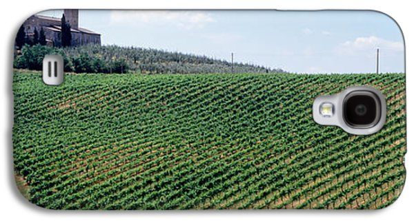 Agronomy Galaxy S4 Cases - Vineyards And Olive Grove Outside San Galaxy S4 Case by Panoramic Images