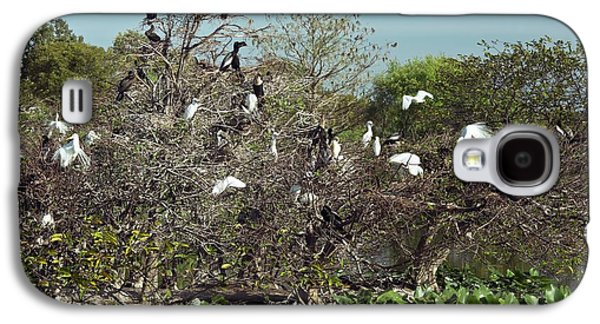 Wading Birds Roosting In A Tree Galaxy S4 Case by Bob Gibbons