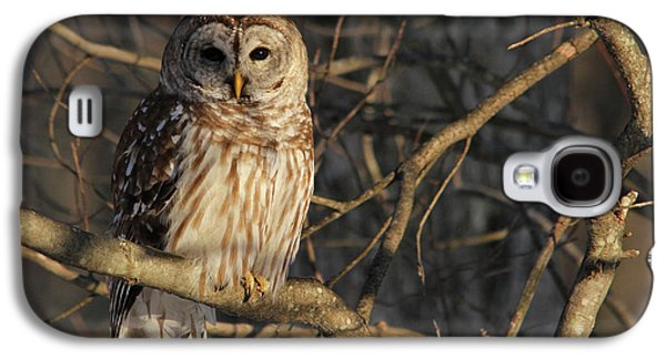 Wildlife Digital Art Galaxy S4 Cases - Waiting for Supper Galaxy S4 Case by Lori Deiter