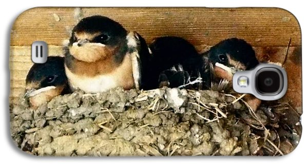 Swallow Chicks Galaxy S4 Cases - Waiting On Dinner Galaxy S4 Case by Audrey Van Tassell