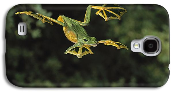 Flying Animal Galaxy S4 Cases - Wallaces Flying Frog Galaxy S4 Case by Stephen Dalton