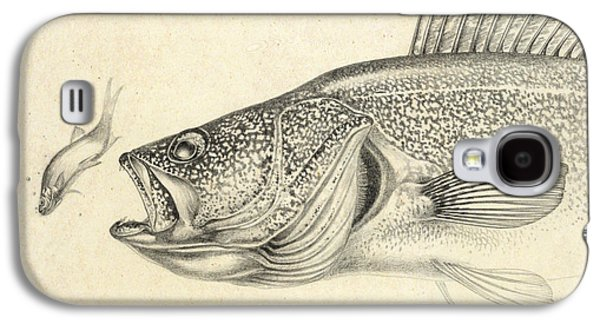 Walleye Galaxy S4 Cases - Walleye Pencil Study Galaxy S4 Case by Jon Q Wright