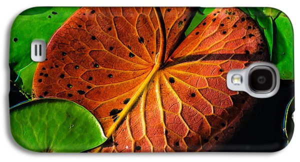 Pine Barrens Galaxy S4 Cases - Water Lily Pad Galaxy S4 Case by Louis Dallara