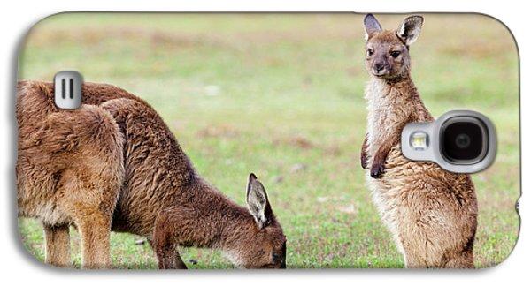 Western Grey Kangaroo (macropus Galaxy S4 Case by Martin Zwick