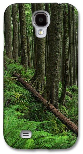 Western Hemlock Trees Grow In Oswald Galaxy S4 Case by Robert L. Potts