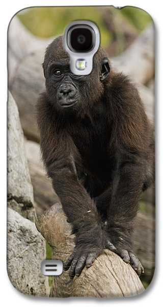 Western Lowland Gorilla Baby Galaxy S4 Case by San Diego Zoo