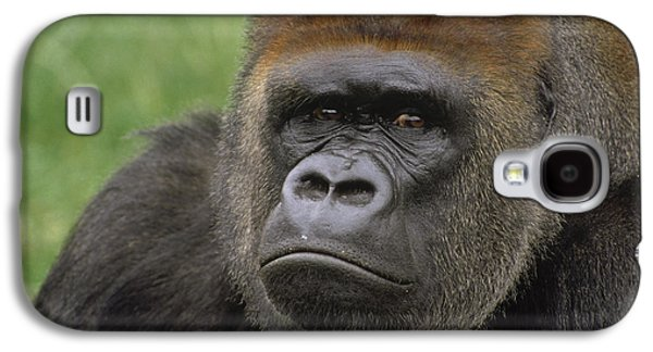 Western Lowland Gorilla Silverback Galaxy S4 Case by Gerry Ellis