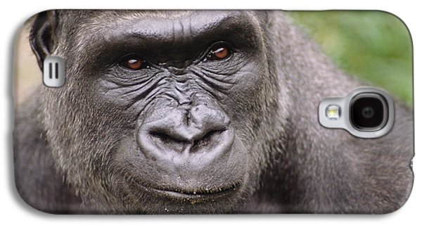 Western Lowland Gorilla Young Male Galaxy S4 Case by Gerry Ellis
