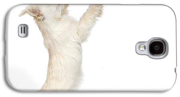 Westie Digital Galaxy S4 Cases - Westie Puppy and Sunflower Galaxy S4 Case by Natalie Kinnear