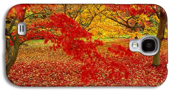 Forest Floor Galaxy S4 Cases - Westonburt Gloucestershire England Galaxy S4 Case by Panoramic Images