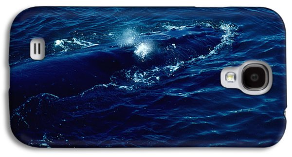 Sun Jewelry Galaxy S4 Cases - Whale In The Atlantic Galaxy S4 Case by Joe  Connors