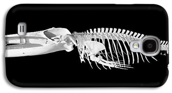 Plankton Galaxy S4 Cases - Whale Skeleton In Black And White Galaxy S4 Case by David Herraez
