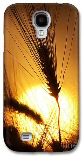 Sunset Abstract Galaxy S4 Cases - Wheat at Sunset Silhouette Galaxy S4 Case by Tim Gainey