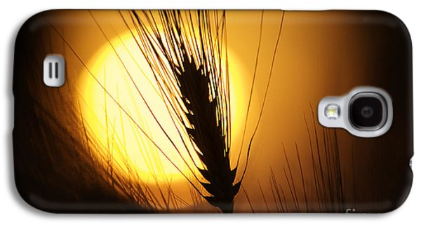 Sunset Abstract Galaxy S4 Cases - Wheat at Sunset  Galaxy S4 Case by Tim Gainey