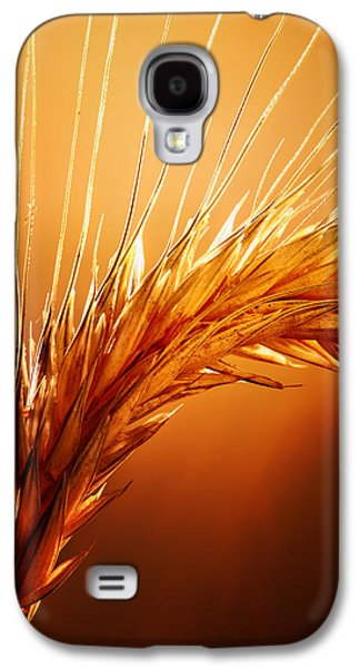 Macro Photographs Galaxy S4 Cases - Wheat Close-up Galaxy S4 Case by Johan Swanepoel