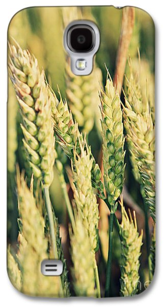 Agronomy Galaxy S4 Cases - Wheat  Galaxy S4 Case by Dan Radi