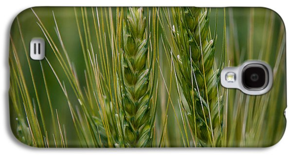 Surreal Landscape Galaxy S4 Cases - Wheat in the Palouse Galaxy S4 Case by David Patterson