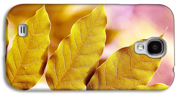 San Francisco Famous Photographers Galaxy S4 Cases - When the Leaves Turn Gold Galaxy S4 Case by Artist and Photographer Laura Wrede