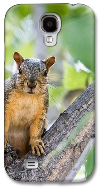 Fox Squirrel Galaxy S4 Cases - Where Is My Peanut Galaxy S4 Case by Robert Bales