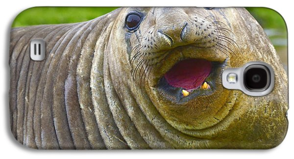 Elephant Seals Galaxy S4 Cases - Whiskers Wrinkles and a Smile Galaxy S4 Case by Tony Beck