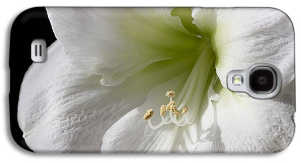 Stigma Galaxy S4 Cases - White Amaryllis Galaxy S4 Case by Adam Romanowicz