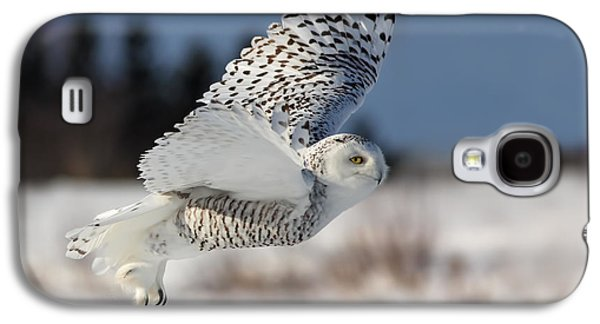Flight Galaxy S4 Cases - White angel - Snowy owl in flight Galaxy S4 Case by Mircea Costina Photography