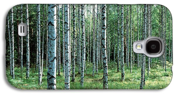 Forest Floor Galaxy S4 Cases - White Birches Aulanko National Park Galaxy S4 Case by Panoramic Images