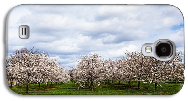 Cherry Blossoms Galaxy S4 Cases - White Cherry Blossom Field in Maryland Galaxy S4 Case by Susan  Schmitz