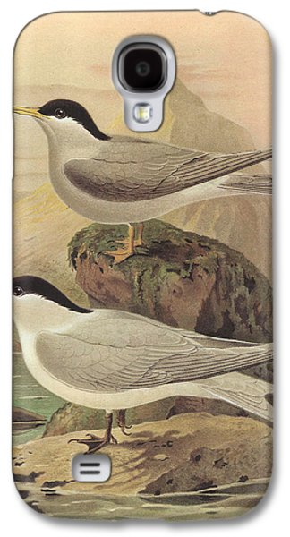 Tern Galaxy S4 Cases - White Fronted Tern and Black Fronted Tern Galaxy S4 Case by J G Keulemans