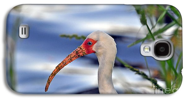 Intriguing Ibis Galaxy S4 Case by Al Powell Photography USA