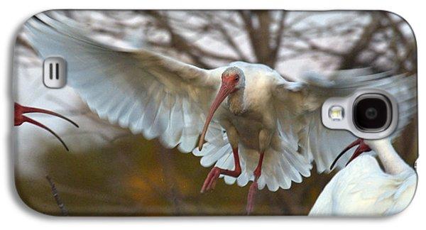 White Ibis Galaxy S4 Case by Mark Newman
